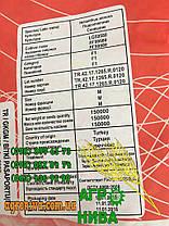 Семена подсолнуха ЛГ 59580, фото 3