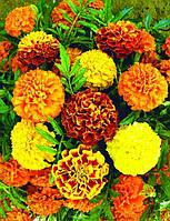 Семена цветов Бархатцы Кармен, пакет 10х15 см