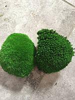 Стабилизированный мох зелёный