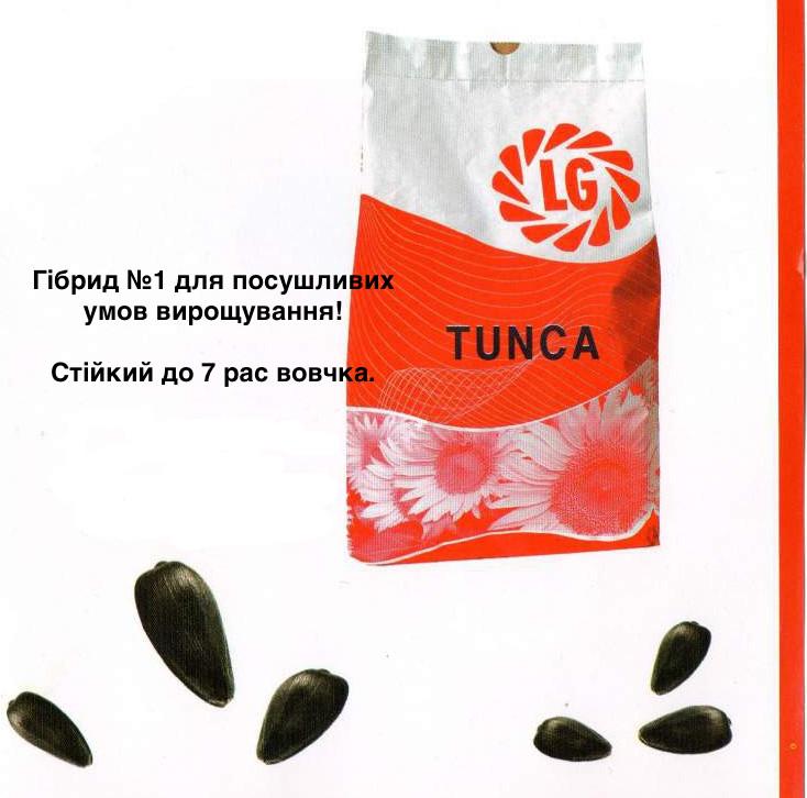 Семена подсолнечника ЛГ Тунка Круизер (LG TUNCA)