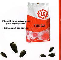 Семена подсолнечника ЛГ Тунка Круизер (LG TUNCA), фото 1