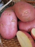 Картофель Ред Скарлет 3кг, фото 1