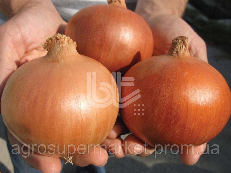 Семена лука Деподжу (Банко) F1 среднеранний, 250 000 семян (BT TOHUM Турция)