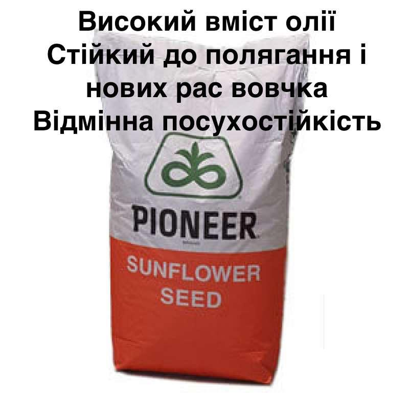 Семена подсолнечника PIONEER P64LЕ25 (П64ЛЕ25) Круизер (укр)