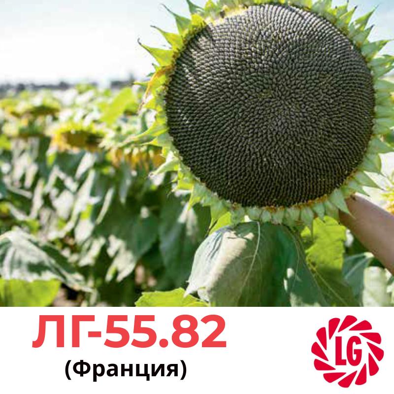 Семена подсолнечника ЛГ 5682 (LG 5582),  Лимагрейн (Limagrain), Франция