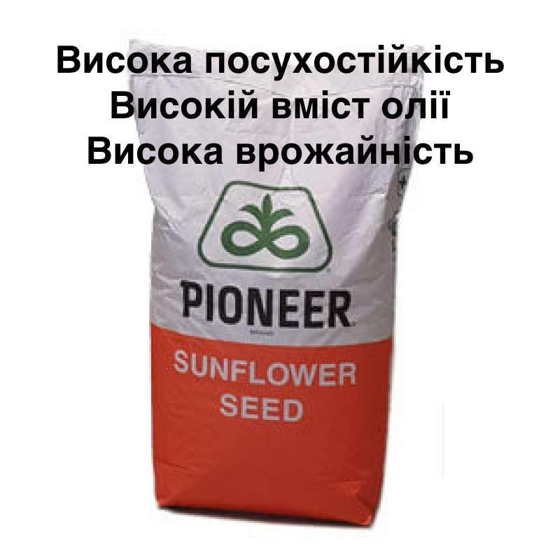 Семена подсолнечника PIONEER P64LL125 (П64ЛЛ125) Круизер