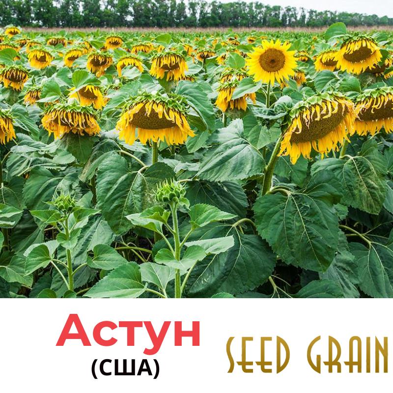 Семена подсолнечника Астун Seed Grain, США