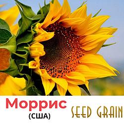 Семена подсолнечника Моррис Seed Grain, США