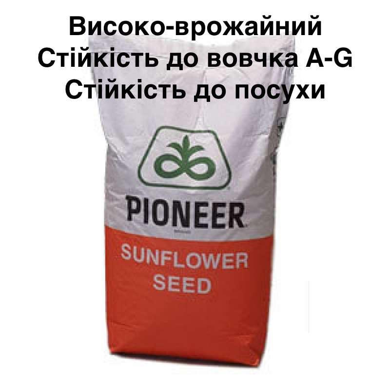 Семена подсолнечника PIONEER P64LL129 (П64ЛЛ129) Круизер