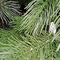 Литая сосна с шишками 1. 8, фото 1