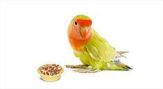 Корма и подкормки для птиц