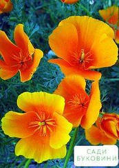 Эшшольция 'Оранжевый король' (в банке) ТМ 'Весна Органик' 8г