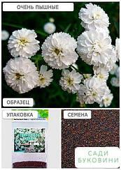 Гипсофила белая (Зипер) ТМ 'Весна' 2г