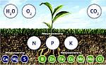 Роль микроудобрений в развитии растений