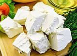Закваска+фермент для сиру ФЕТА, фото 4