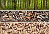 Біопаливо Ліс-1л