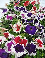 Семена цветов Петуния Крупноцветковая Синяя, пакет 10х15 см