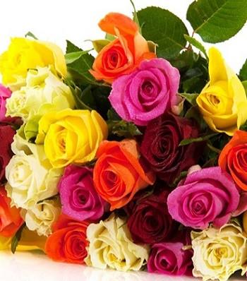 Рози  МІКС (4 штуки)