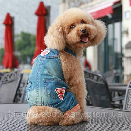 Джинси для собак, колір - денім, розмір 2XL, фото 2