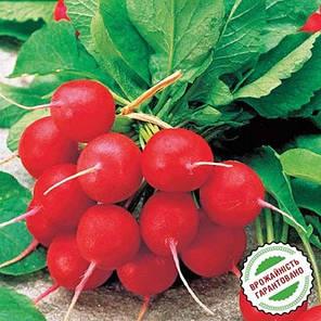 Джолли семена редиски, 3 г — редис, ранний,  Clause, фото 2