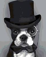 Картина по номерам Бульдог в пенсне, 40x50, фото 1