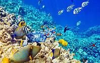Большой Барьерный риф под угрозой