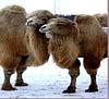 Подушка из верблюжьей шерсти CAMELLO