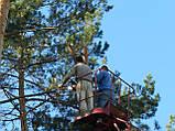 Спиливание деревьев Киев.корчевание пней,обрезка веток, фото 3