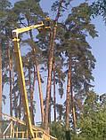 .Спиливание деревьев с помощью оттяжки лебедкой, фото 4