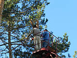 .Спиливание деревьев с помощью оттяжки лебедкой, фото 5