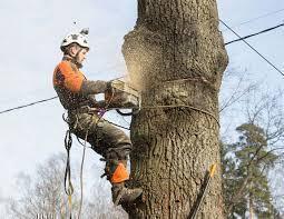 .Спиливание деревьев с помощью оттяжки лебедкой