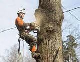 Спиливание деревьев с помощью оттяжки лебедкой, фото 2