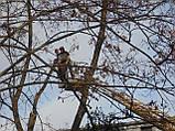 Спиливание деревьев с помощью оттяжки лебедкой, фото 4