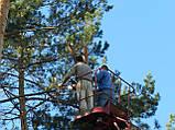 Спиливание деревьев с помощью оттяжки лебедкой, фото 6