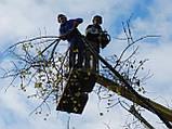 Спиливание деревьев с помощью оттяжки лебедкой, фото 9