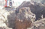 Спиливание деревьев с помощью оттяжки лебедкой, фото 10