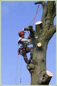 Спиливание деревьев с помощью оттяжки лебедкой