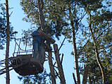 Спиливание  дерева в Киеве  и Области., фото 9