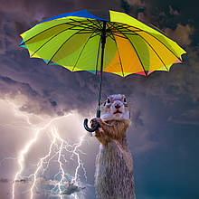 Бестселлеры этого года среди зонтов