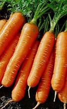 Морковь Артек. 15г. Флекс-пакет.Ранняя.