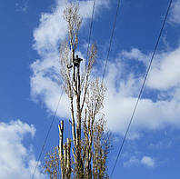 Арбористы. Уборка и обрезка деревьев