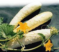 Огурец Белый деликатес Пекина, фото 1