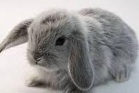 Декоративные кролики, рекомендации по уходу