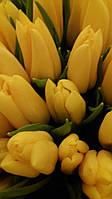 Тюльпан Жовтий