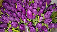 Тюльпан Фіолет