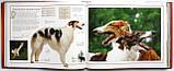 Собаки. Походження та опис понад 160 порід собак з усього світу, фото 4
