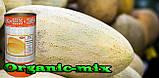 Семена, дыня Торпеда / Радужная (Россия), семена, обработанные, 500 грамм банка, фото 4