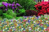 Травосмесь Цветущий (Мавританский) газон - 1 кг./упак.