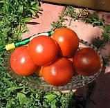 Кристал F1 семена томата высокорослого Clause Франция 1 г, фото 2