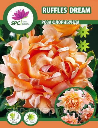 Роза флорибунда Ruffles Dream, фото 2